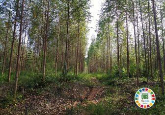 Com projeto Plantio de Floresta Sustentável, Rio Deserto vence Prêmio Expressão de Ecologia